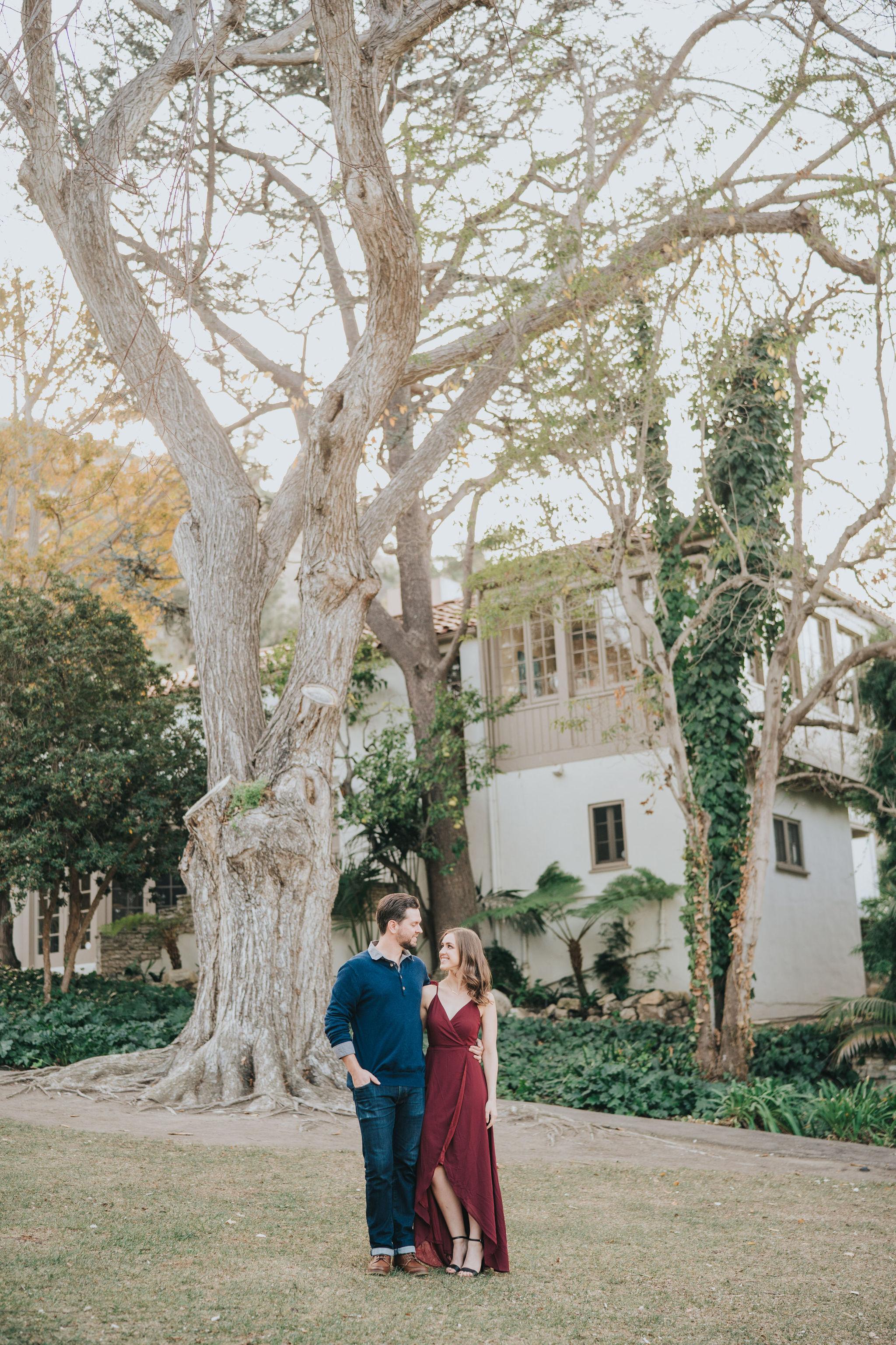 Palos Verdes Tree